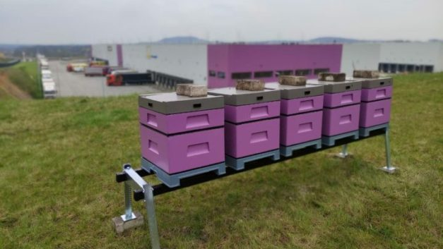 DL Invest installing beehives in pilot project